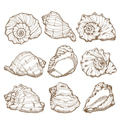 Hand drawing seashell set vector