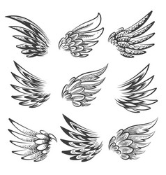 bird wings logo or emblem set vector image