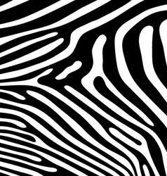 Skin zebra vector