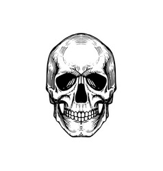 skull in engraving style vector image