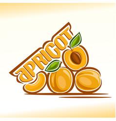 Apricot still life vector