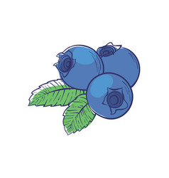 Ripe blueberry isolated icon vector
