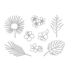 Set of one line drawing tropical plants vector