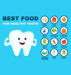 best food for healthy tooth strong tooth vector image