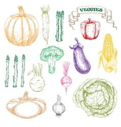Colored sketch of wholesome and fresh vegetables vector