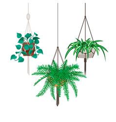 Flat macrame house plants vector