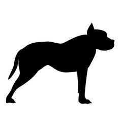 Pit bull terrier icon black color flat style vector