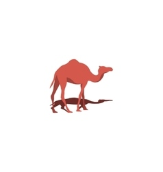 Camel and Shadow vector image