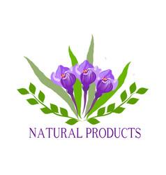 Natural organic food bio eco labels and shapes vector