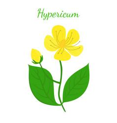 st johns wort hypericum cartoon style vector image