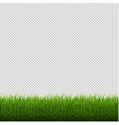 Grass border isolated transparent background vector