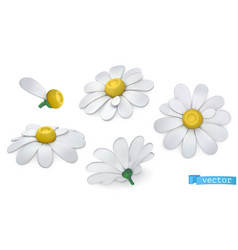 Chamomile flowers daisies 3d icon set vector
