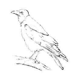 Hand drawn crow vector