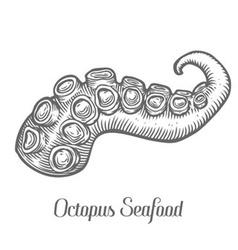 Octopus Arm vector image vector image