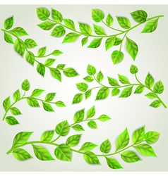 Set of branches with green leaves vector image