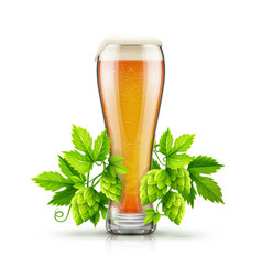 glass of light lager beer vector image vector image