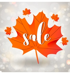 Autumn sale season design with maple leaf vector image