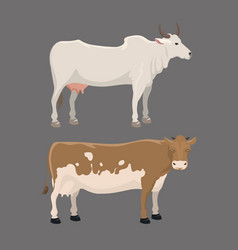 Bull and cow farm animal vector
