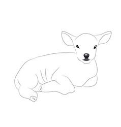 lamb lies drawing lines vector image