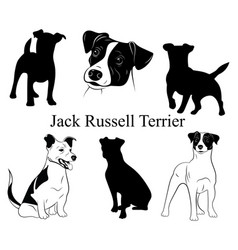 Set jack russell terrier collection of vector
