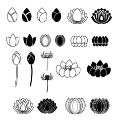 set lotus flowers vector image