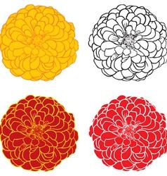 zinnia color vector image