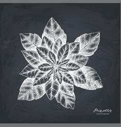 hand drawn poinsettia vector image