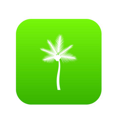 Palm butia capitata icon digital green vector