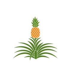 Pineapple vector