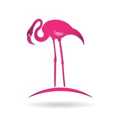 Flamingo bird over pond vector image vector image