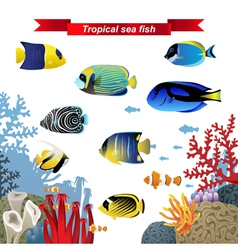 Coral reef fishes vector image vector image