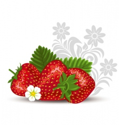 strawberry with flowers and leaves vector image vector image