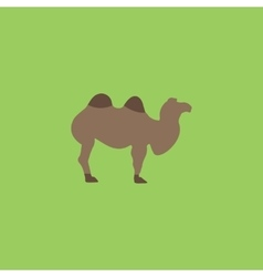 Camel flat icon vector image
