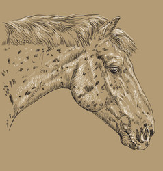 horse portrait-2 on brown background vector image