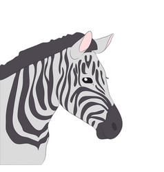 portrait of zebra drawing color vector image