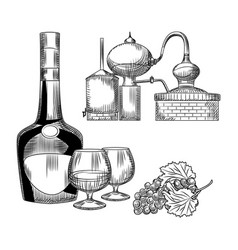 Set cognac in hand drawn style on white vector