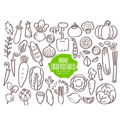Set of hand drawn vegetables doodles vector image