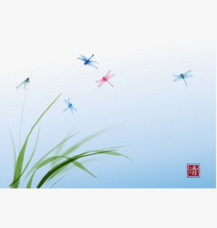 dragonflies and leaves of grass on blue sky vector image