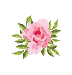 Peony Hand Drawn Realistic vector