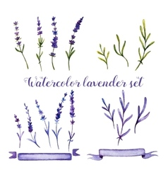 Set of watercolor lavender and ribbons vector image