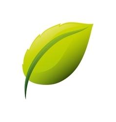 Leaf natural concept vector