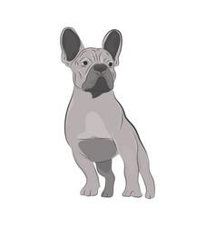 French bulldog purebred canine hand drawn vector