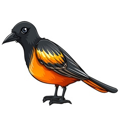 Oriole vector image