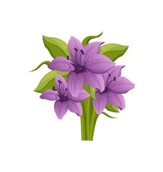 Purple Lily Hand Drawn Realistic vector image