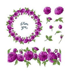 set of purple dahlia floral elements isolated vector image