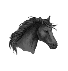 Black riding horse sketch of arabian stallion vector image