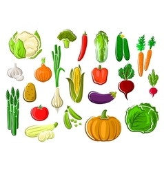 Healthy fresh ripe isolated farm vegetables vector image vector image