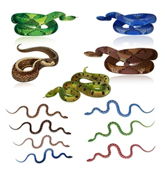 Snake set vector
