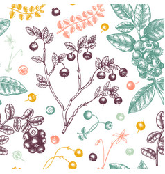 Wild berries seamless pattern in engraved style vector