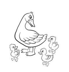Kind duck and free little cute ducklings walk vector image